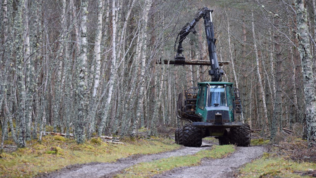 Commissie Bosbouw i.o.